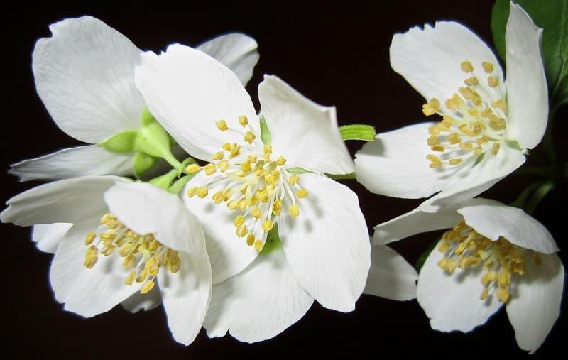 tinh dầu dùng trong mùa xuân