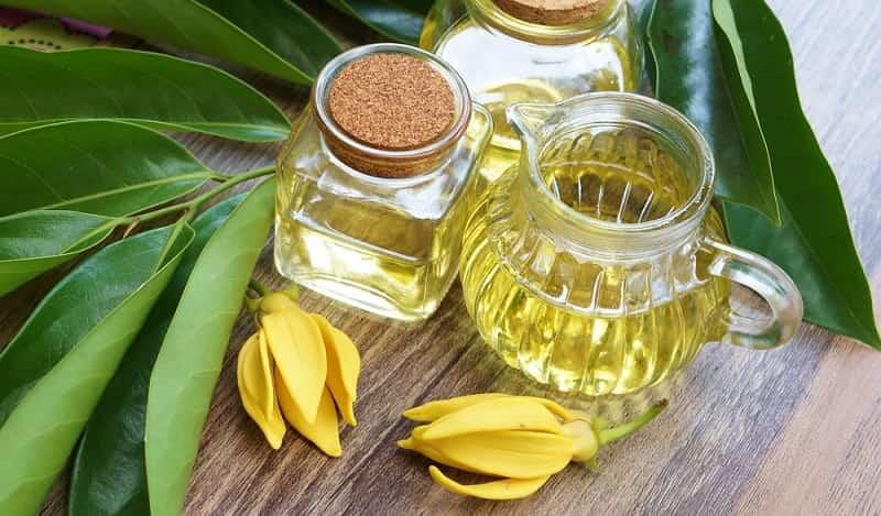 tinh dầu ngọc lan tây cho mùa hè