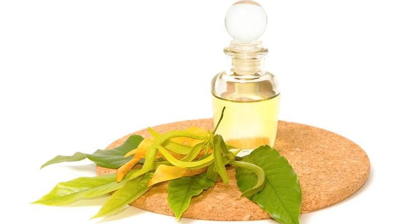 sử dụng tinh dầu ngọc lan tây